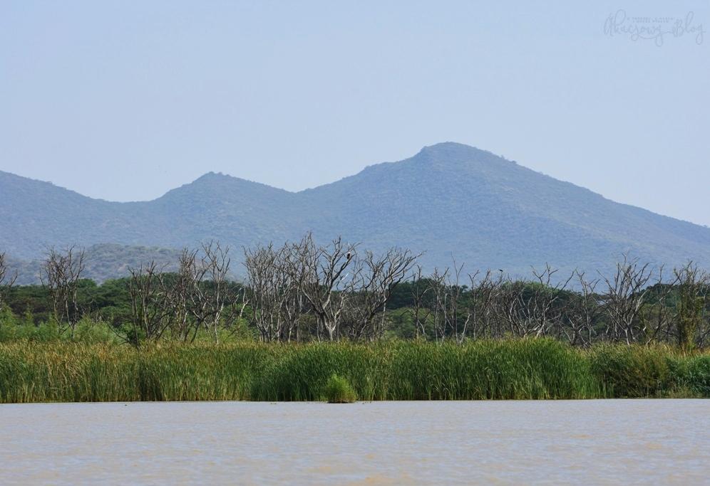 Podróż po Etiopii - część 23 - Jezioro Chamo w Parku Narodowym Nech Sar.