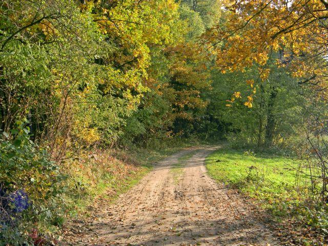 las, jesień, polna droga, przyroda