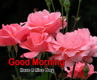 New Good Morning 4k Full HD Images Download For Daily%2B21