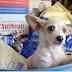 Κορωνοϊός: Κανένα ζώο χωρίς φαγητό και για αυτό τι κάνει μια οργάνωση