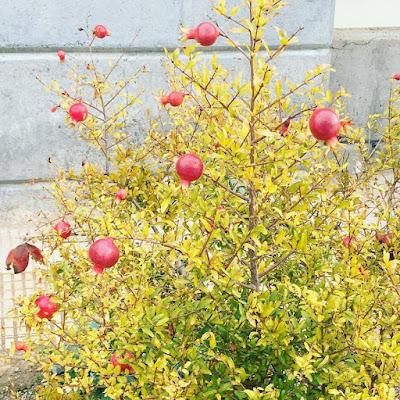 plantas, universidad de alicante, UA