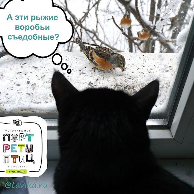 кошка охотится на птиц