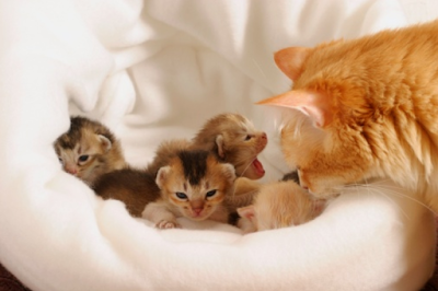 Cara merawat Kucing hamil - [ Mudah ] Ternyata Inilah Ciri - Ciri Kucing Hamil Dan Cara Merawatnya