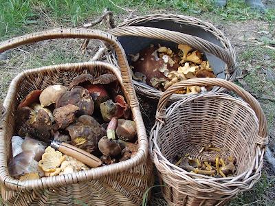 grzyby 2017, grzyby w sierpniu, grzyby na Orawie, borowiki, pieprzniki trąbkowe, grzyby podziemne, babie lato