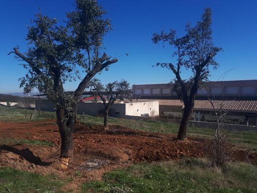 Trasplante de encinas centenarias y floración de arbustos en Villa Isabelica por Ruepra Jardinería