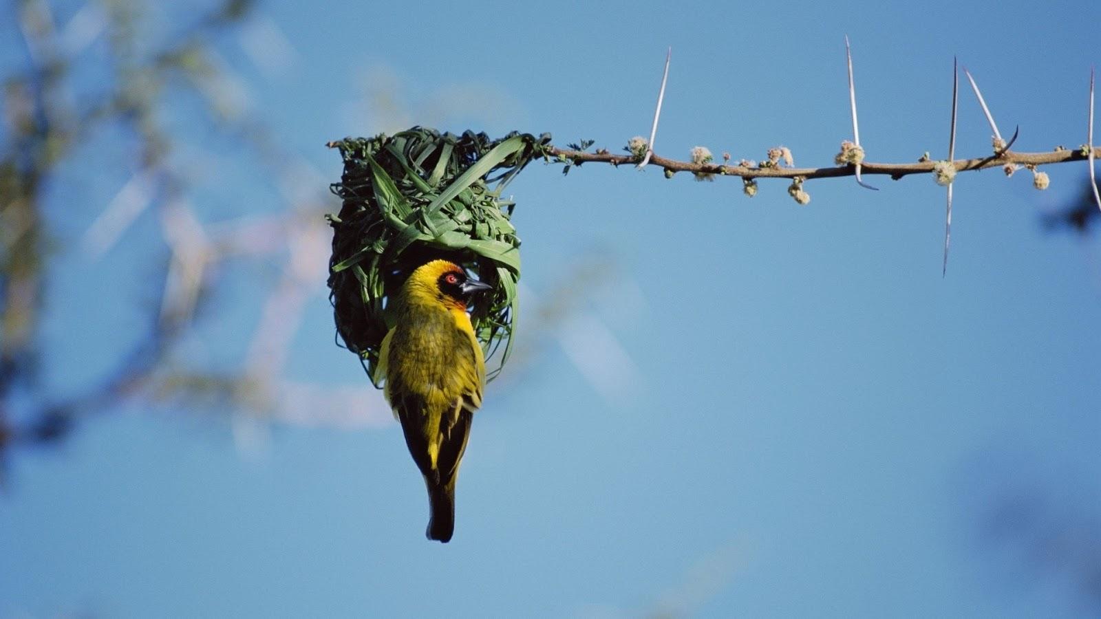 Genelia Cute Wallpaper Nest Birds Wallpapers Entertainment Only