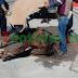 Desvanece caballo tras deshidratarse, en Matamoros