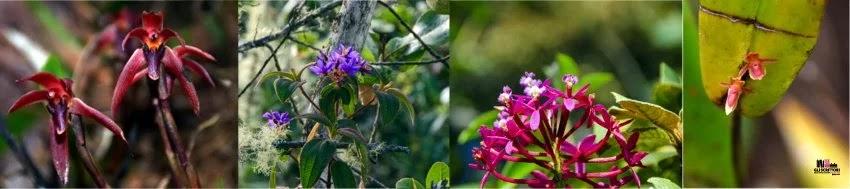 Stazione biologica Wayqecha: biodiversità