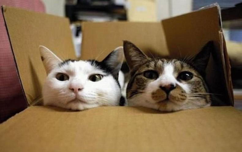 Dois gatos dentro de uma caixa