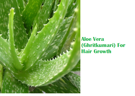 Aloe Vera (Ghritkumari) For Hair Growth