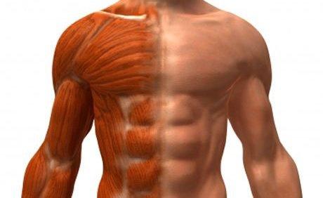 Cómo definir mis abdominales | 1000 Fit Meals