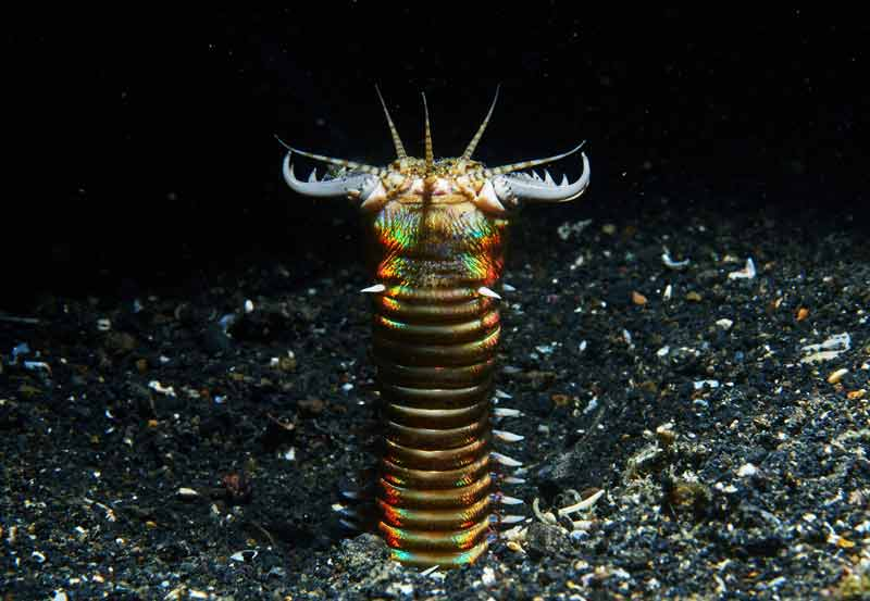 Cientistas encontraram evidências de vermes gigantes