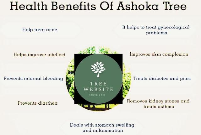 ashoka tree medicinal use