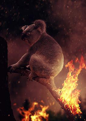 Image of Koala sitting on burning burning tree