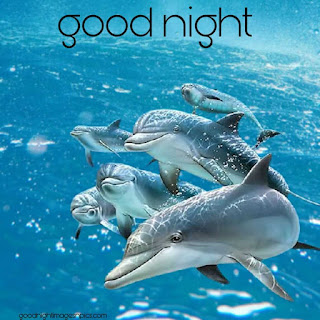 Pretty goodnight images With Fish