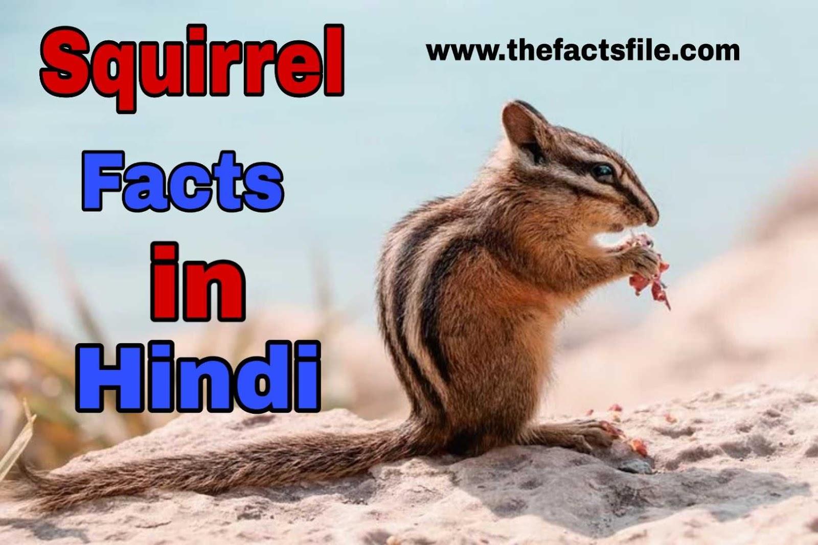 गिलहरी के बारे में 21 मजेदार तथ्य - Squirrel facts in Hindi