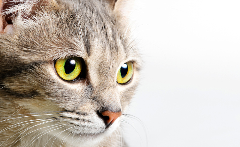 What Your Cat's Nose Can Tell You About Their Overall Health