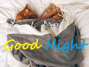 cat with good night