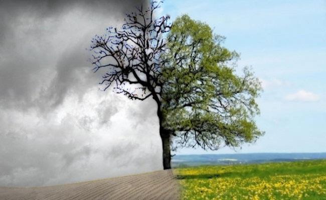 Se Conhece a Árvore pelos Seus Frutos