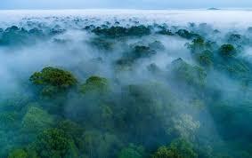 Taman Nasional Gunung Palung
