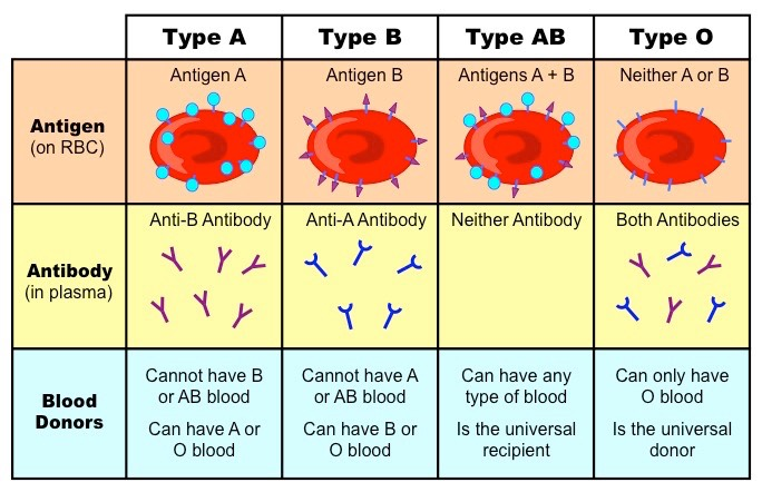 Late, abo blood group genetics agree, rather