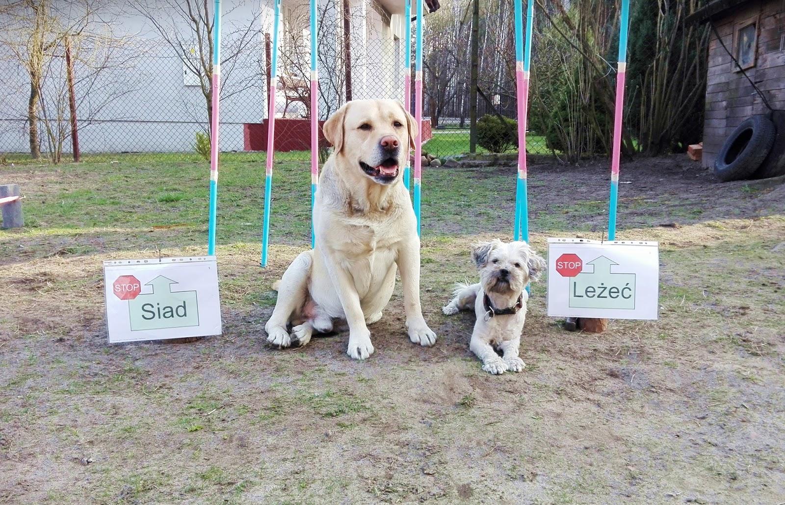 jak nauczyć psa komendy siad, jak nauczyć psa komendy leżeć, jak wychować psa, blog o psach, psiolubni.com.pl