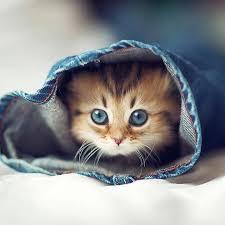 Petua Halau Kucing Berak Merata