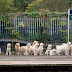 Τι γυρεύουν τόσοι σκύλοι στον σταθμό;