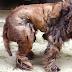 Después de años descuidado, este perro estaba tan peludo que nadie sabía qué raza era. Horas después su transformación me hizo llorar