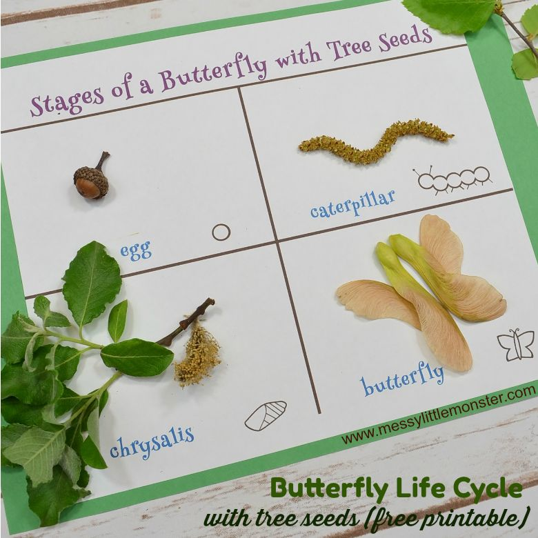 Butterfly life cycle nature craft for kids