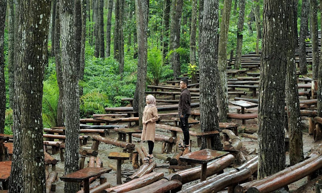 Hutan Pinus Mangunan Jogja, Wisata Alam yang Mempesona