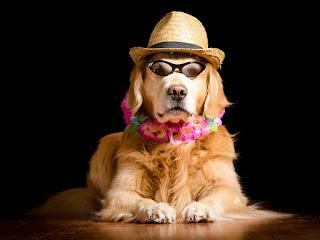 Yılın En Komik Hayvan Fotoğrafları Vahşi Hayvanlar Fotoğraflar, Resimler Ve Görseller HD Kalitesinde Hayvan Resimleri Komik Hayvan Capsleri En Komik Hayvan Caps'leri resimleri
