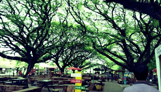 Taman Pohon Trembesi
