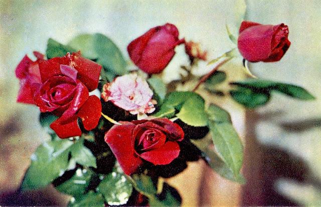 Букет роз. Фото Е. Савалова. Открытка 1971 года