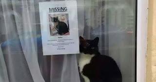 6 consejos inteligentes para encontrar un gato perdido