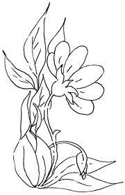 sketsa bunga: Gambar Sketsa Bunga Tulip