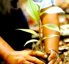 Imagen del Día Internacional de los Bosques