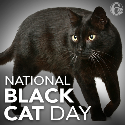 National Black Cat Day Wishes Images download