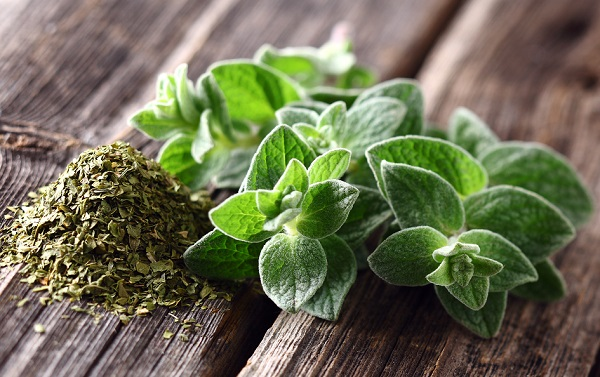 What are the benefits of medical oregano?
