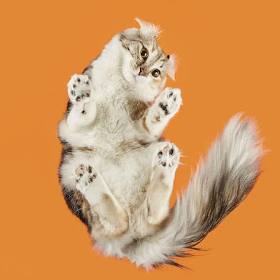 Photographer Shows Cats From Underneath In This Fun Photo Series