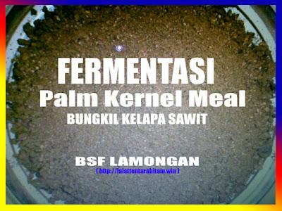 Fermentasi bungkil kelapa sawit untuk media dasar ternak maggot BSF