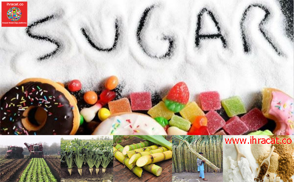 sugar export, sugar rtade, sugar been