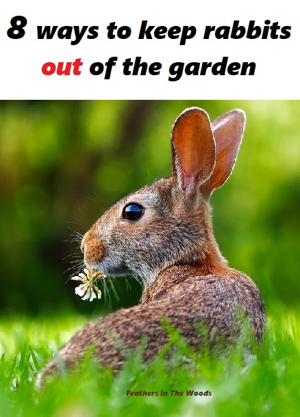 8 tips to keep rabbits out of your garden feathers in - How to keep rabbits out of a garden ...