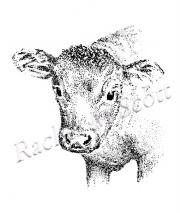 Calf stipple illustration by Rachel M Scott
