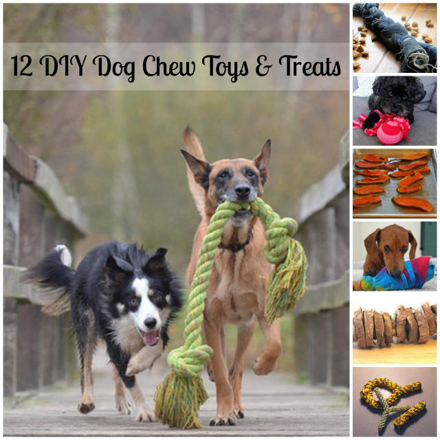 12 DIY Dog Chew Toys and Treats to keep your dog busy!