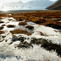 Permafrost in Greenland (Credit: Shutterstock) Click to Enlarge.