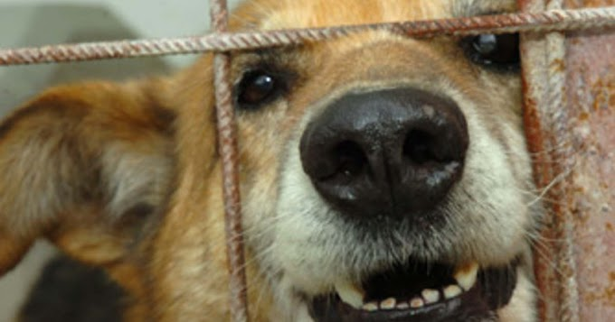 Háromszor is megpróbálta megölni a szomszéd kutyáját, bevallotta bűnét