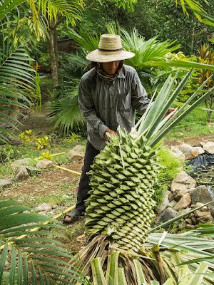 gdzie kupic zdrowy syrop z agawy