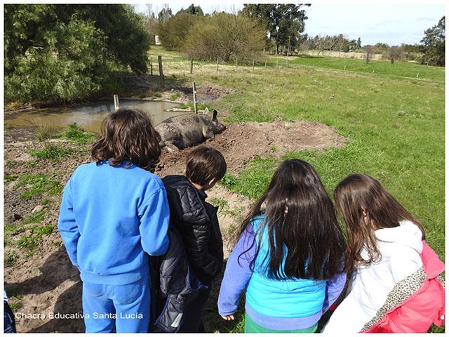 Niños observando a una cerda-Chacra Educativa Santa Lucía