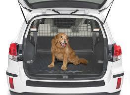 cão descendo em carro hotel petfriendly